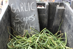 What's for dinner? Garlic scapes!